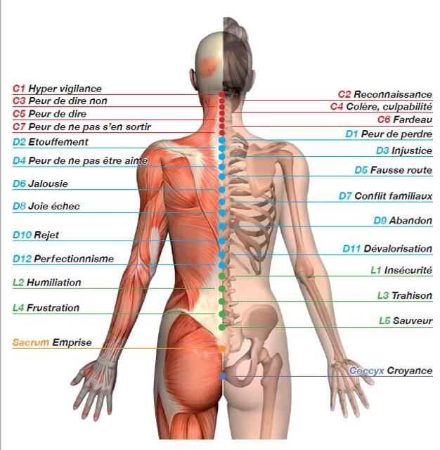 https://ayungdari.wordpress.com/2013/01/26/symbolique-du-corps-le-dos-et-les-vertebres/