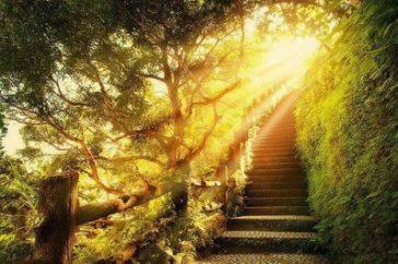 Rayon de lumière sur les arbres et le chemin.