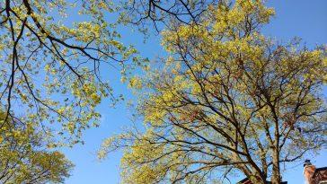 Arbre avec feuilles jaunes.
