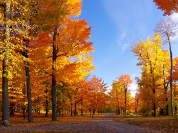 Forêt de feuilles oranges-automne.