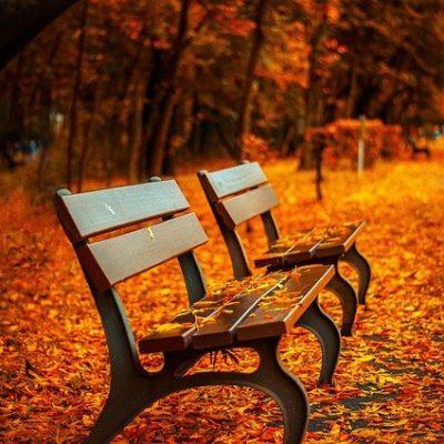 Deux banc avec feuilles orange d'automne au sol.