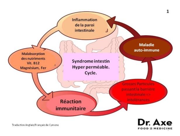 Schéma intestins.