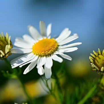 Billet du jour du 20 Novembre : il était une fois une fleur très douce….