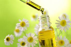 huile et fleurs de camomilles.